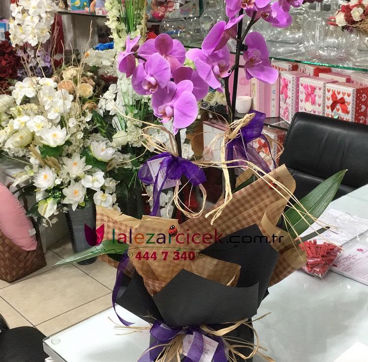 Mor Orkide 2li