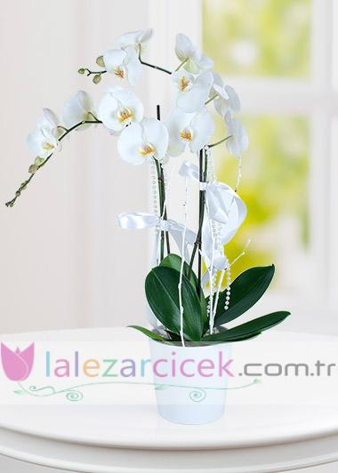 Orkide 2 li